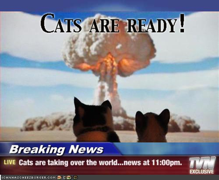 Cats are ready