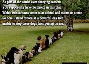 death,after,life,reincarnation,spirituality,God,dogs,